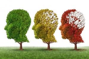 plasticità cervello